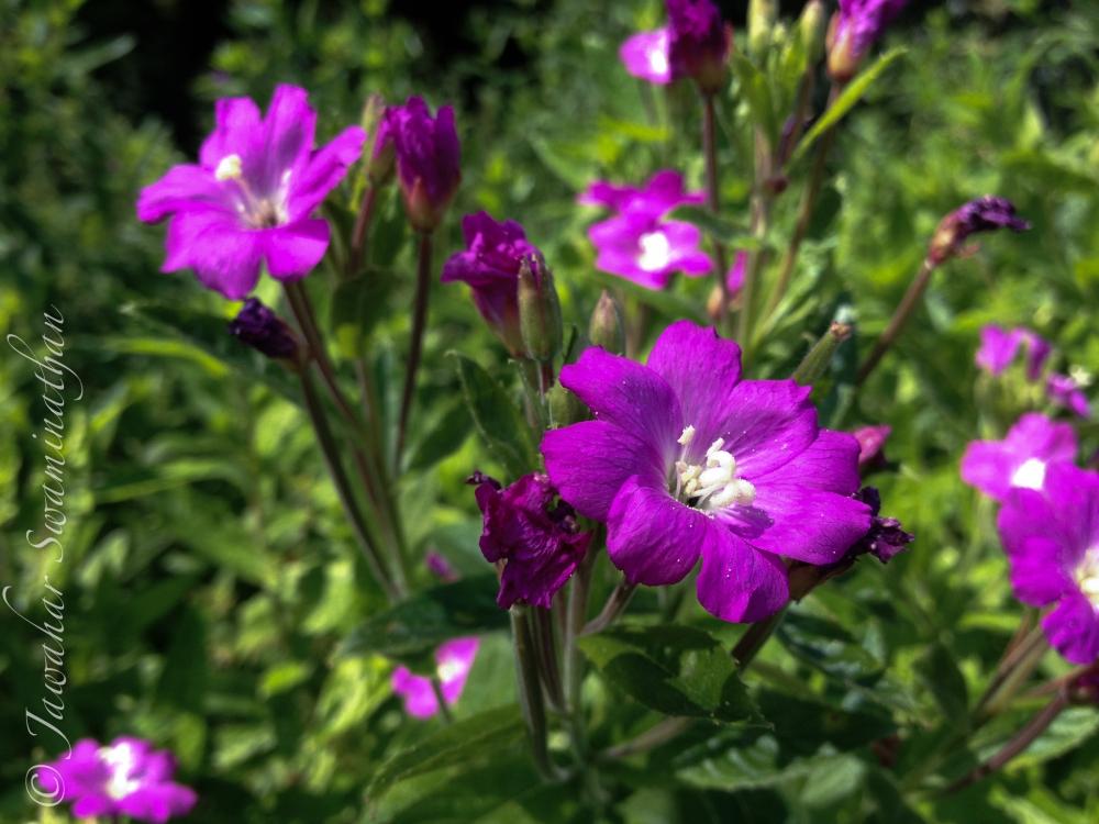 British Wild Flowers (3/6)